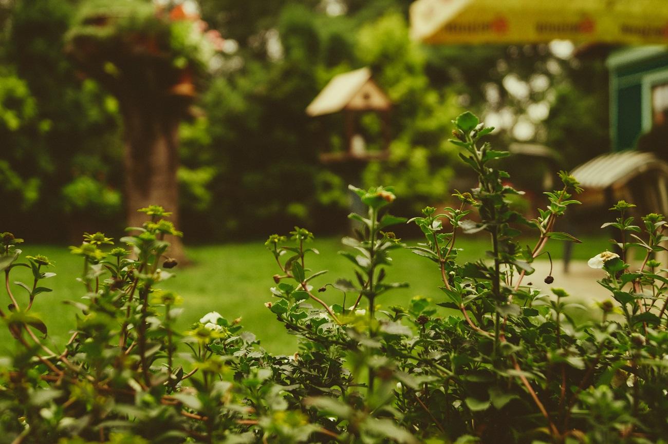 Pronajměte si (nejen) na léto zahradu